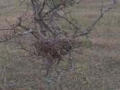 Bird nest found while walking very close to ground