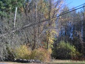 High Winds, Tree Down On Power Lines In Hancock