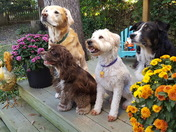 Four Dog Afernoon
