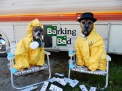 Barking Bad