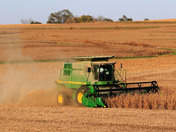 October Soybean Harvest