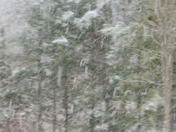 Snow in Mt Holly, VT