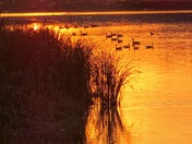 Geese-at-Sunset