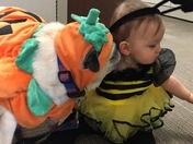 Puddin' the Pug Pumpkin at a Halloween party