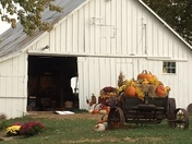 Alldredge Orchards (10 min from Zona Rosa)