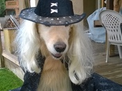 Rhett Dressed Up As Gandalf the Wizard