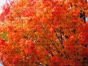 Nebraska Autumn