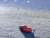 Lone fall leaf