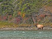 Banff Fall