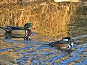 Buddies on the pond