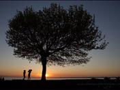 The Pair Tree....