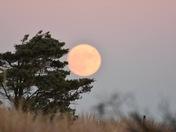 Super moon  rising last night 11-13-16