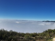 A Foggy Avila Ridge Pano 11/15/2016