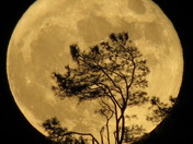 Super Moon - Cameron Park Country Club - John Drury