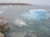 Arctic Cannonball!