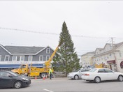 The Wolfeboro Christmas Tree has arrived!
