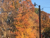 Fall leaves at Union Cross Fire Dept. 11/19/16