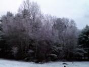 First Snowfall in Casco, Maine Nov 21, 2016 6:30 AM