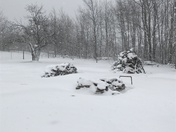 Snow and critters