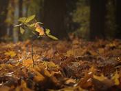 Blanket of Leaves