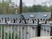 Hummer line up