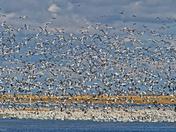 Fall Migration!