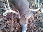 Deer from Opening Day of Rifle Season