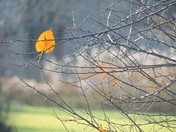 Last Leaf of Autumn