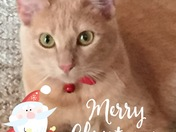 Vanilope's Christmas