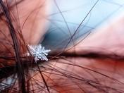 Snowflake on my hair!