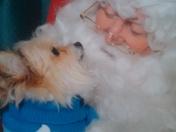 Gizmo and Santa