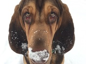 Puppy's First Snowstorm