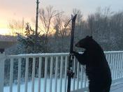 Bear at Sunrise