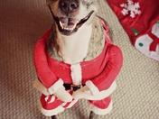 Smokey dressed up as Santa!