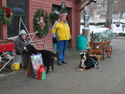 Bernese Mountain Dogs at the Rocks CHristmas Tree Farm