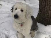 Maggie Mae enjoying the snow