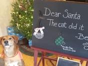 Cat blaming