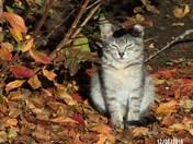 Koscuisko Kitten