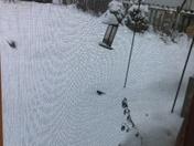 Thiensville bird feeder