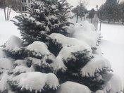 Snow in Franklin