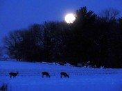 The Deer and Moon Rise 12-14-2016