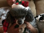 Pets ready for Christmas