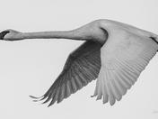 Very Big Bird