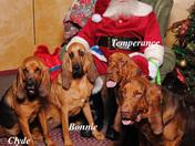 Slobbers for Santa...