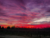 Sunrise from vineyard