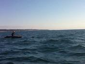 Pelagic Shark Research Foundation