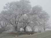 Christmas Eve morning fog
