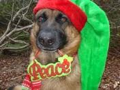 Ziva is ready for Santa!