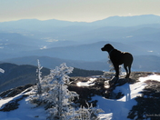Bella on Hunger Mtn Summit