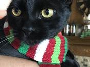 Reggie in her Christmas scarf.